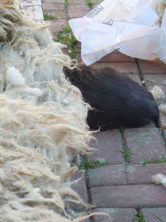 Meesh rolling in fleece