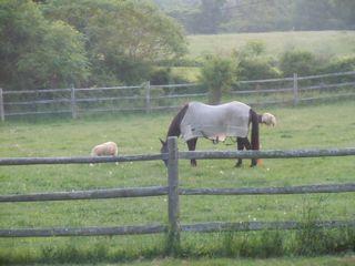 Pasture Pals I