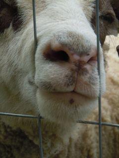 Georgie's Pink Nose